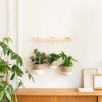 Suspension inversée avec son assortiment de plantes