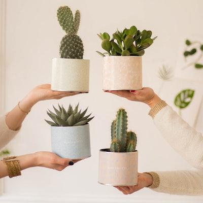 Oscar et ses cache-pots - Assortiment de cactus