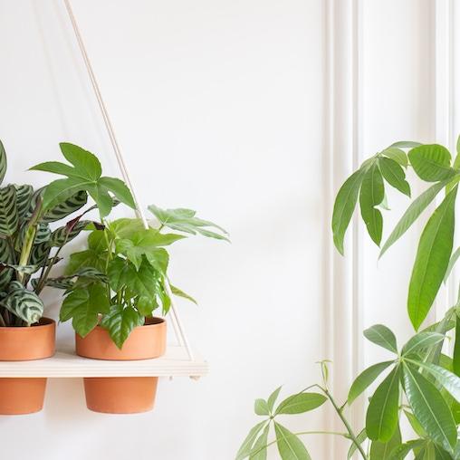 Plantes zoom