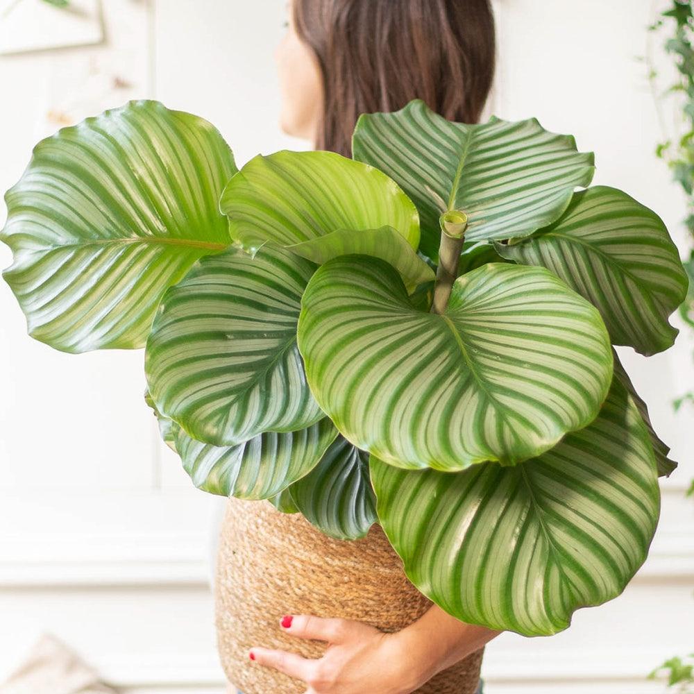 plante-interieur-originale