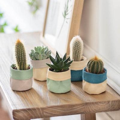 """Unser Mini Kaktus-Set """"Louise"""" mit Übertopf"""