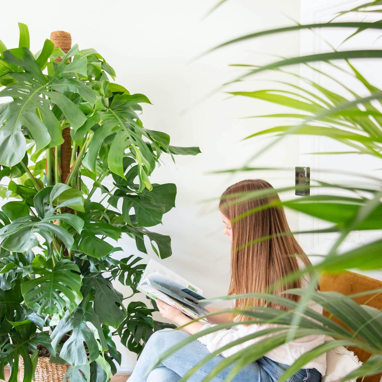grandes-plantes-d-interieur