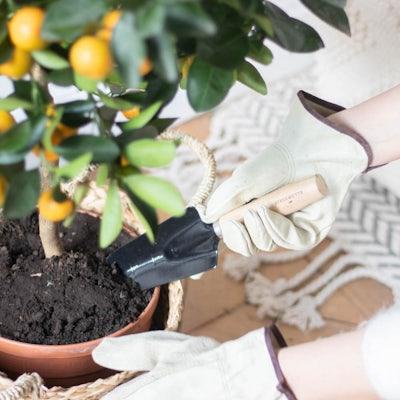 Die perfekte Schaufel für deine Pflanzen