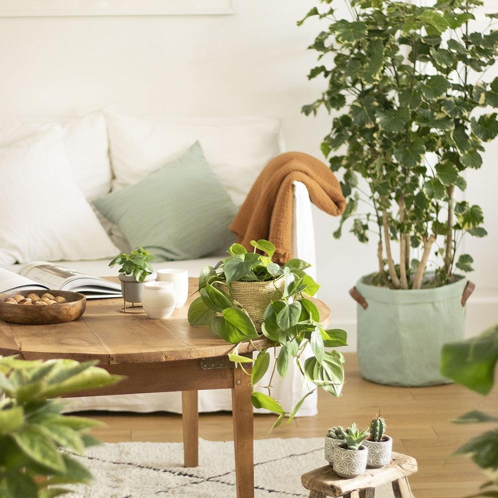 salon intérieur plantes vertes d'intérieur décoration bergamotte