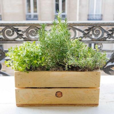 Julie et sa jardinière en bois - Plantes aromatiques