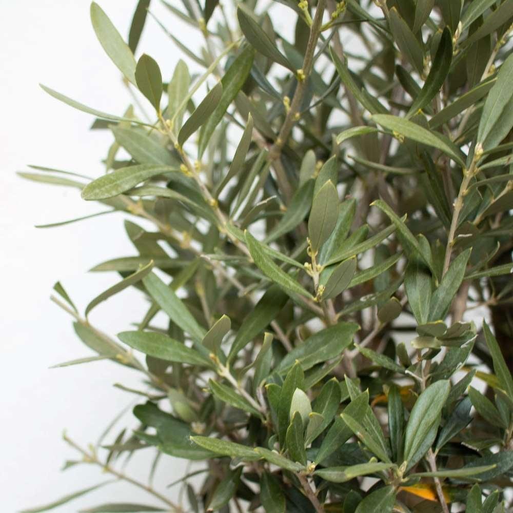 plante-exterieur-resistante-froid