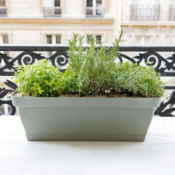 Soline et sa jardinière verte - Aromatiques