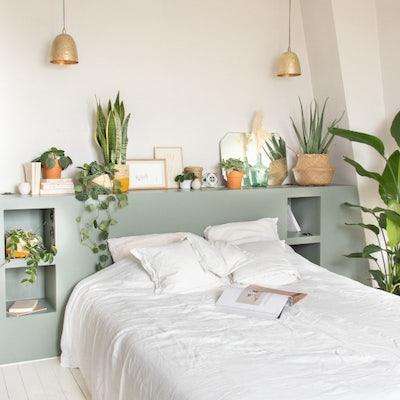 Schlafzimmer-Pflanzen