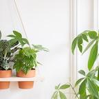Zoom Pflanzen