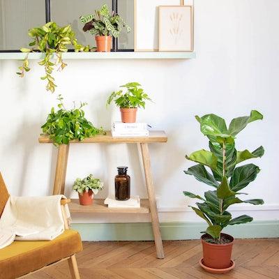"""Pflanzen-Set """"Wenig Platz"""" ohne Übertöpfe"""