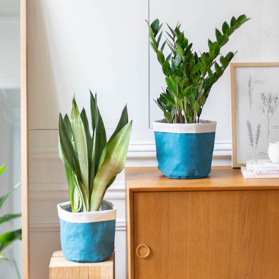 """Unser Pflanzen-Set """"Lena"""" mit blauem Übertopf"""