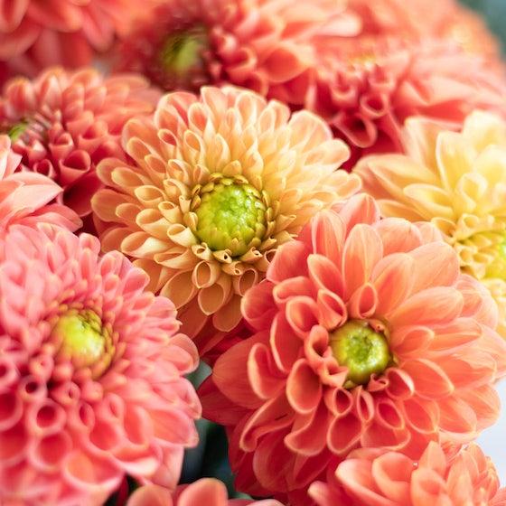 Jolie photo de fleurs