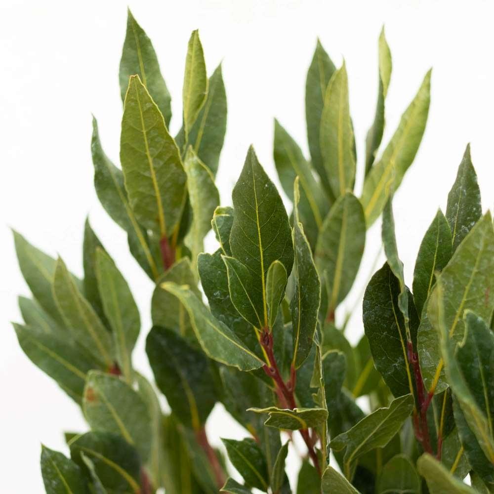 plante-exterieur-hiver