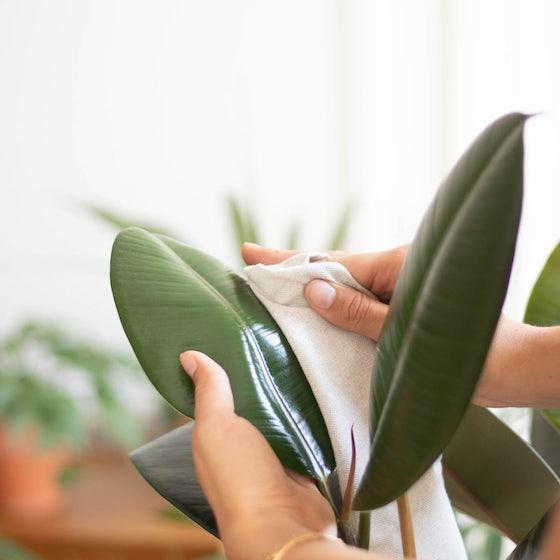 Nettoyage d'une plante
