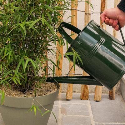 entretien-bambou-fargesia