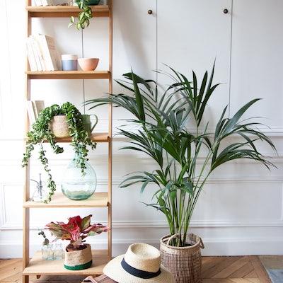plantes vertes pendant les vacances
