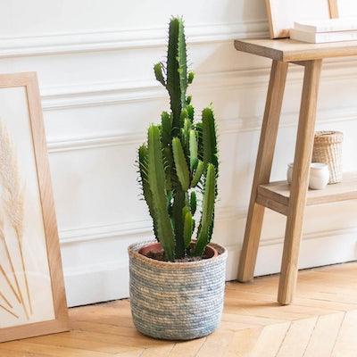 Pablo - Euphorbia acrurensis et son cache-pot