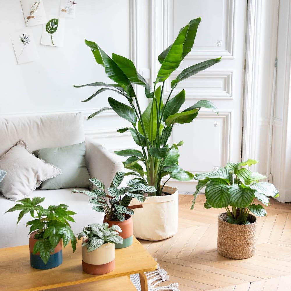 plantes vertes intérieur décoration