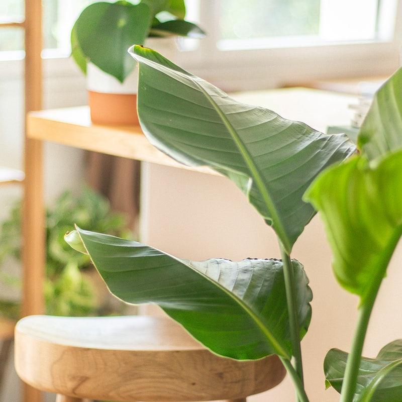 plantes vertes faciles d'entretien plantes d'intérieur