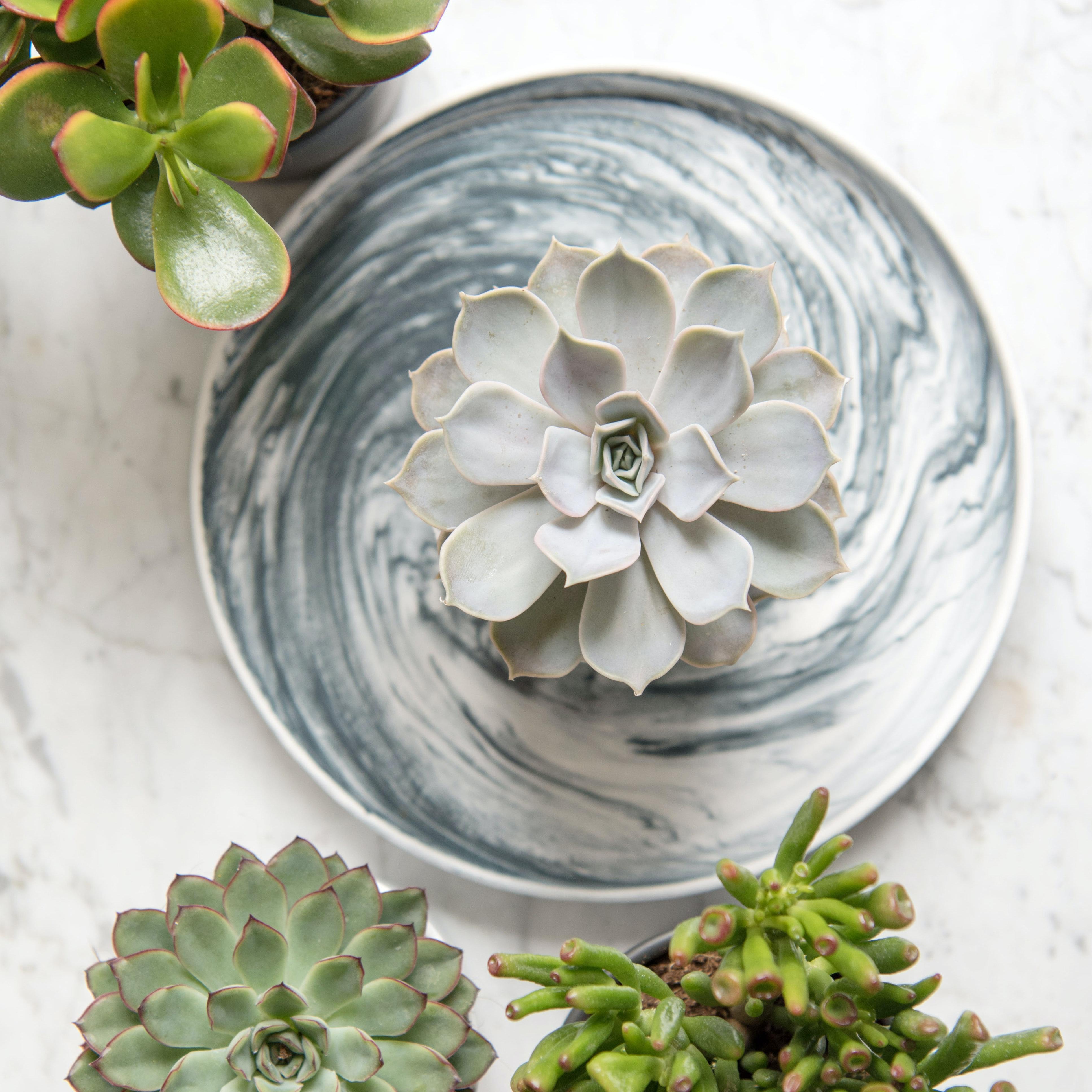 plantes grasses décoration intérieur bergamotte