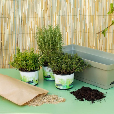 Soline et sa jardinière verte - Trio d'herbes aromatiques