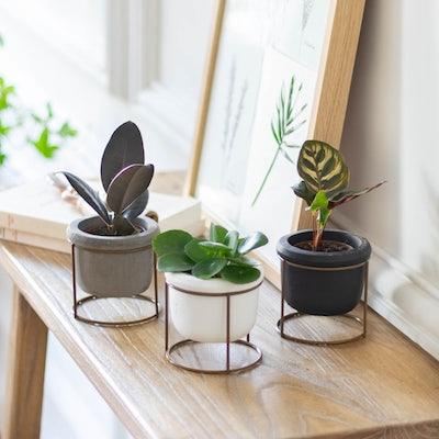 """Unser Pflanzen-Set """"Willy"""" mit Übertopf"""