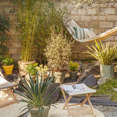 plantes-mediterraneennes-en-pot
