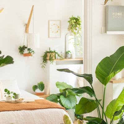 livraison Plante d'intérieur plante verte commander plantes en ligne décoration d'intérieur