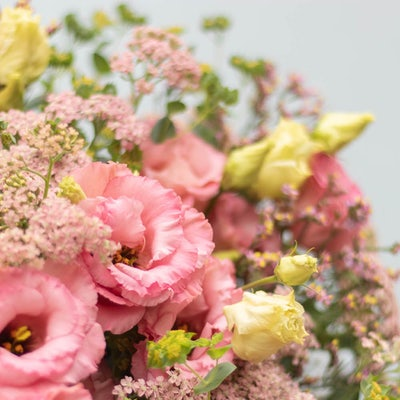Zoom sur Bouquet Palm Beach+