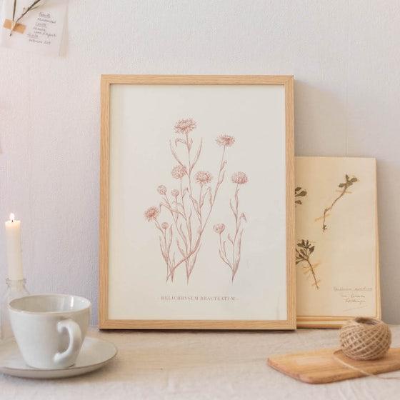 Cadre Helichrysum