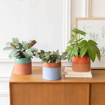Alfred - Plantes vertes avec cache-pots