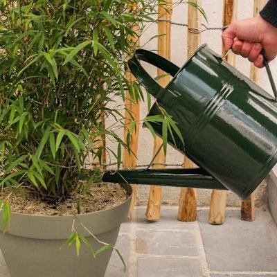 plantation-bambou