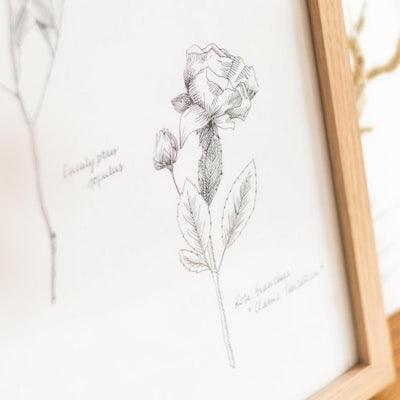 Zoom Cadre gravure Herbier