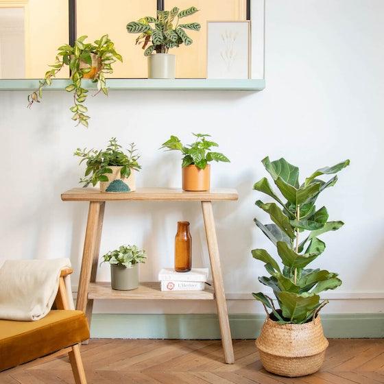 Tribu Petits Espaces - Sélection de plantes d'intérieur avec cache-pots