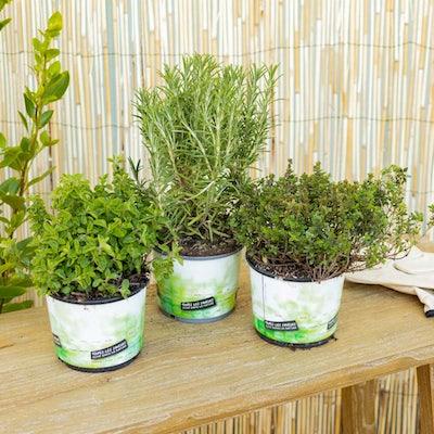 Le trio d'herbes aromatiques pour accompagner vos grillades