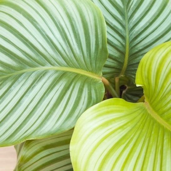 de plantes