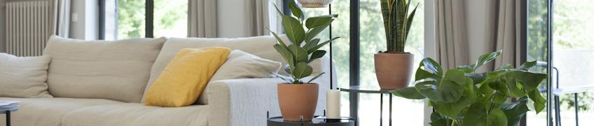 Plantes pour le salon