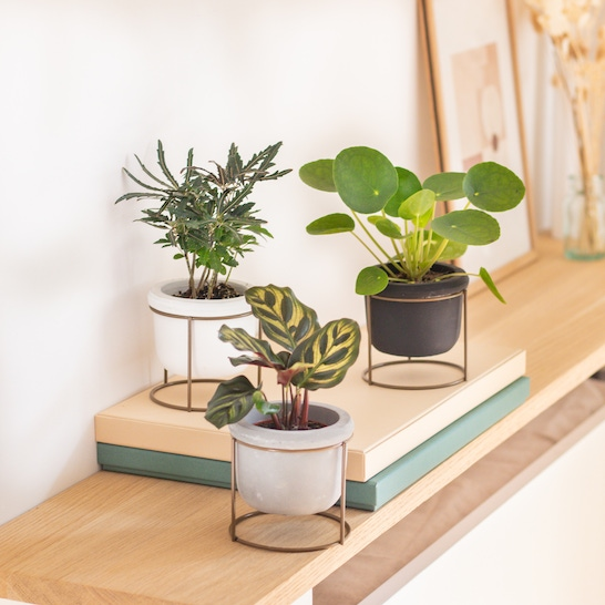 Willy - Trio of small plants