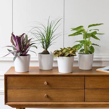quatuor plantes