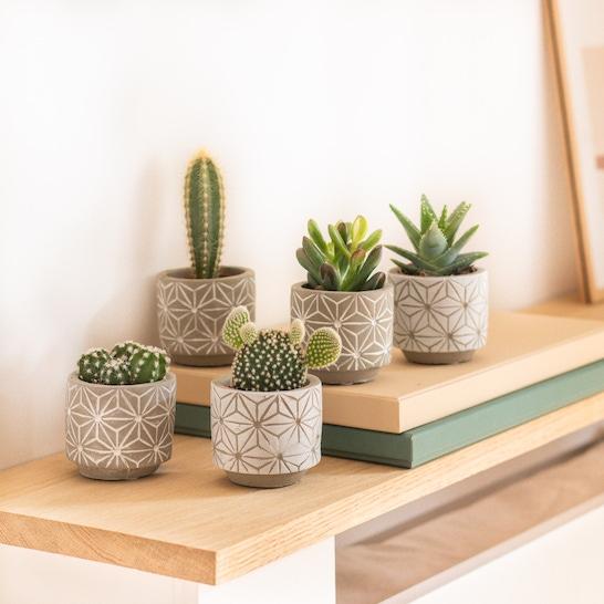 Louise - Mini cactus with pot