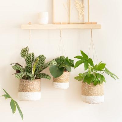 3 grüne Pflanzen zum hängen