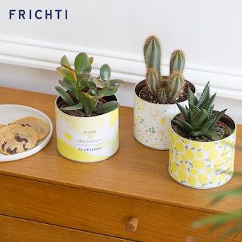 Amalfi - Bergamotte x Frichti