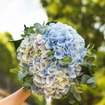 Bouquet Cancale