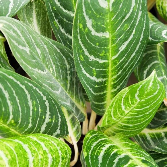Details plants Producer