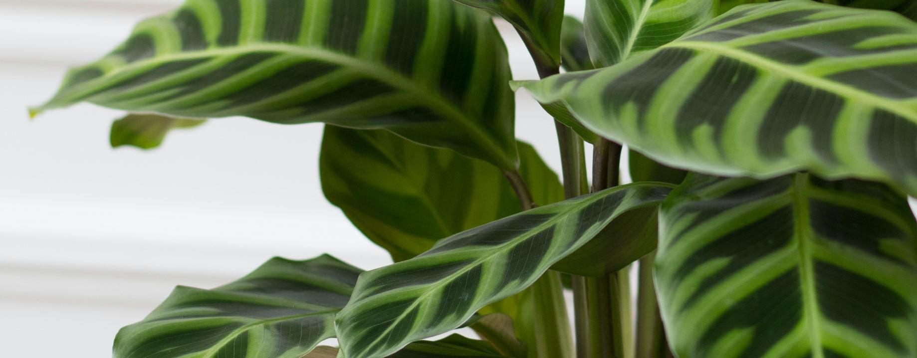 Plant detail 3