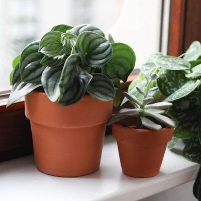 Plant detail 2