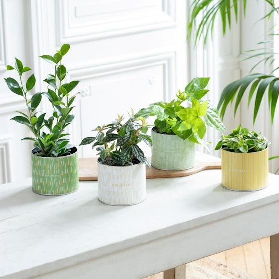 Achille - Assortiment de plantes vertes