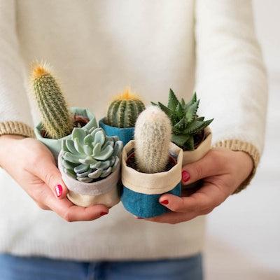 """Unser schönes Kaktus-Set """"Louise"""" für dich oder als Geschenk"""