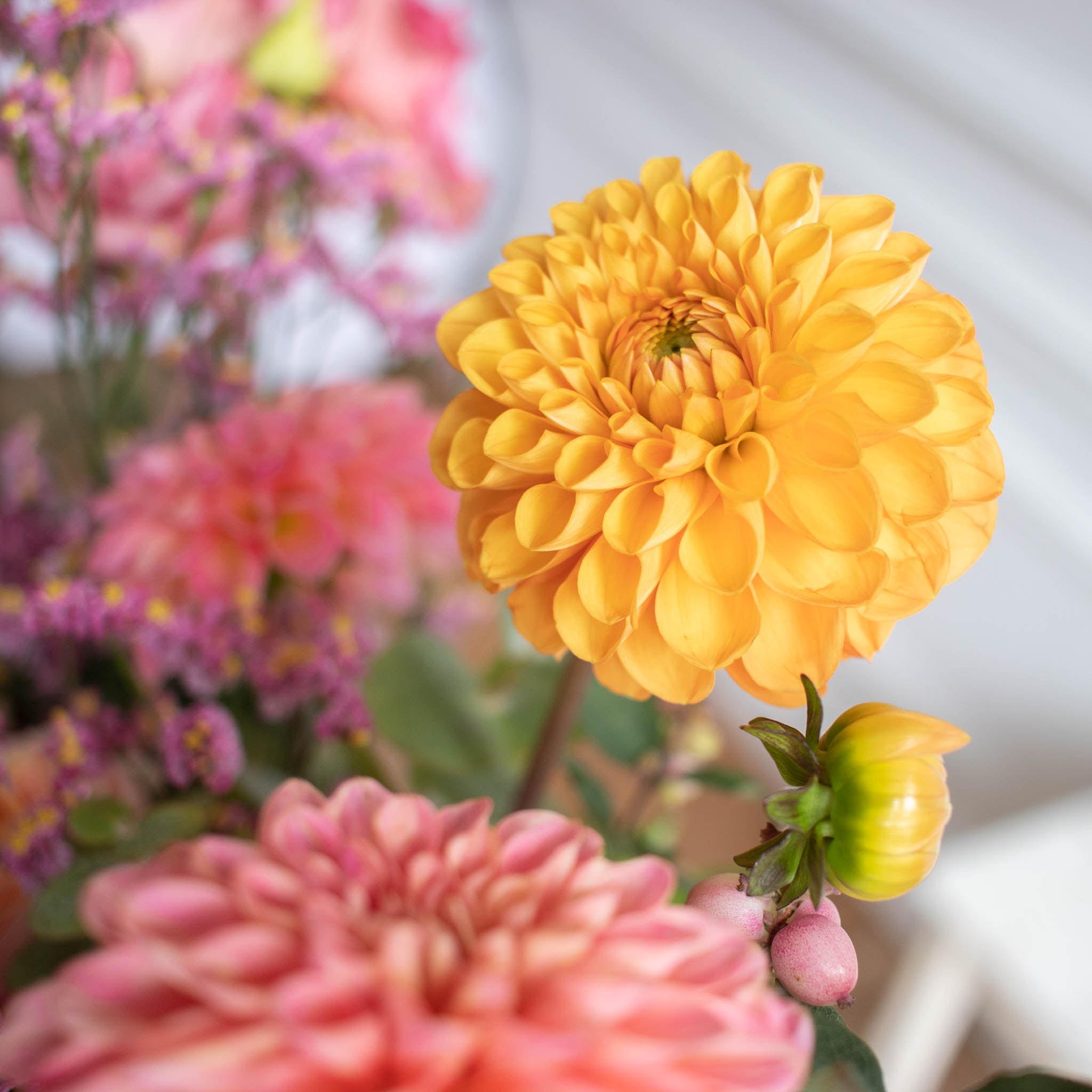 Bouquet Ciutadella