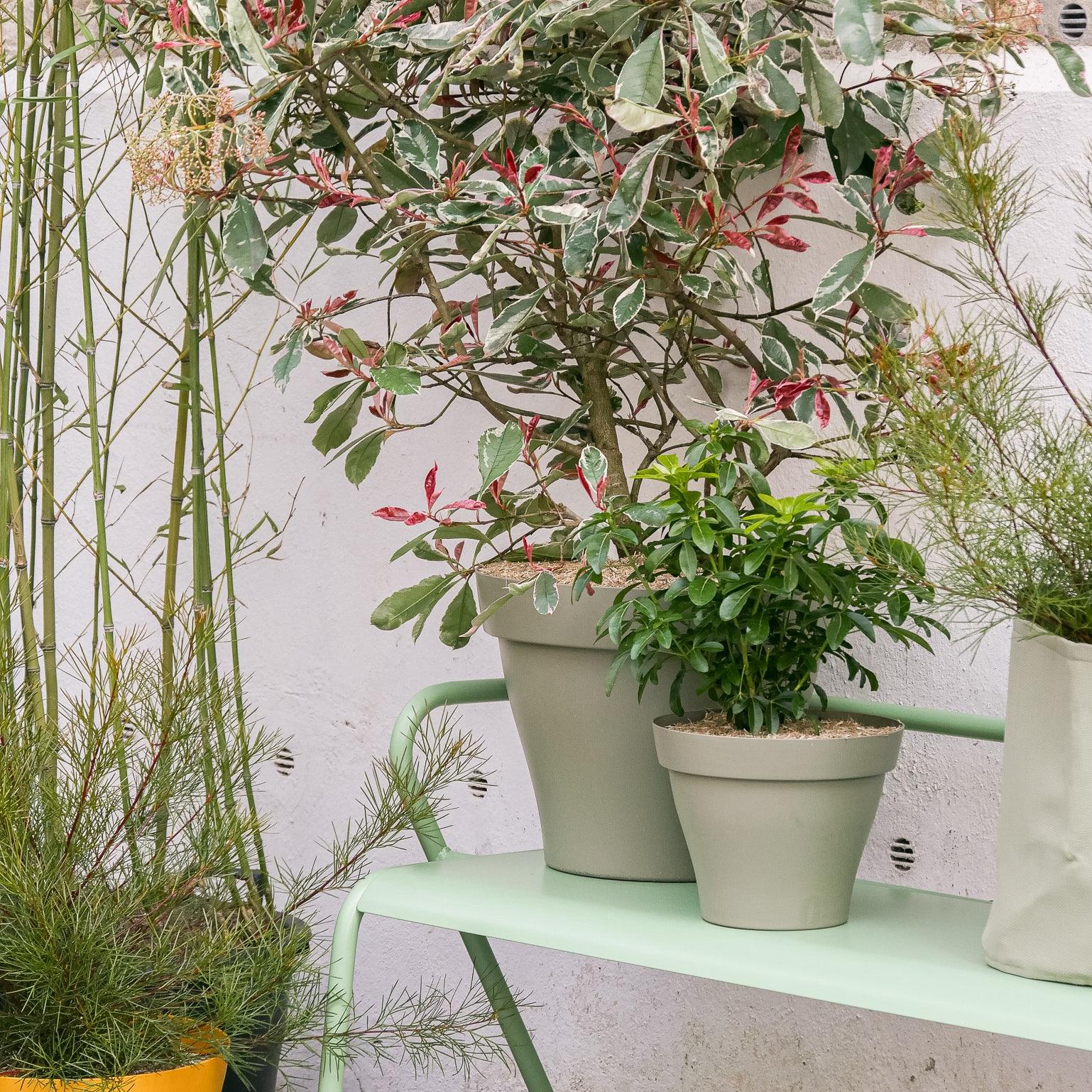 comment-conserver-ses-plantes-exterieur-pendant-les-vacances
